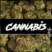CannabisP62